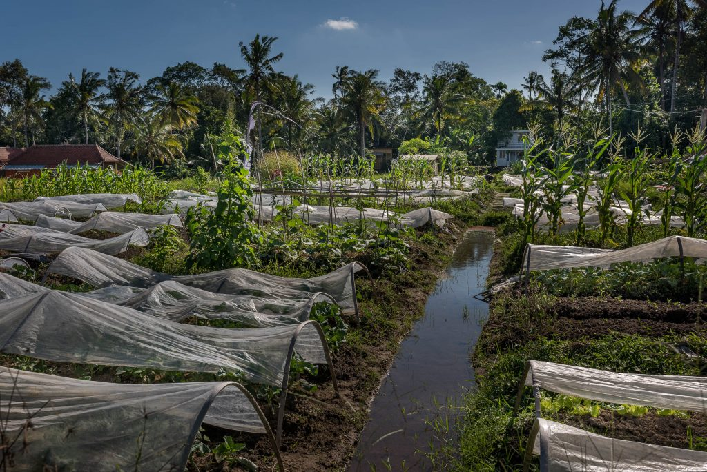 Ojas Prana | Organic and Healthy Food #bali #traveling #organic #deviliciouslyraw