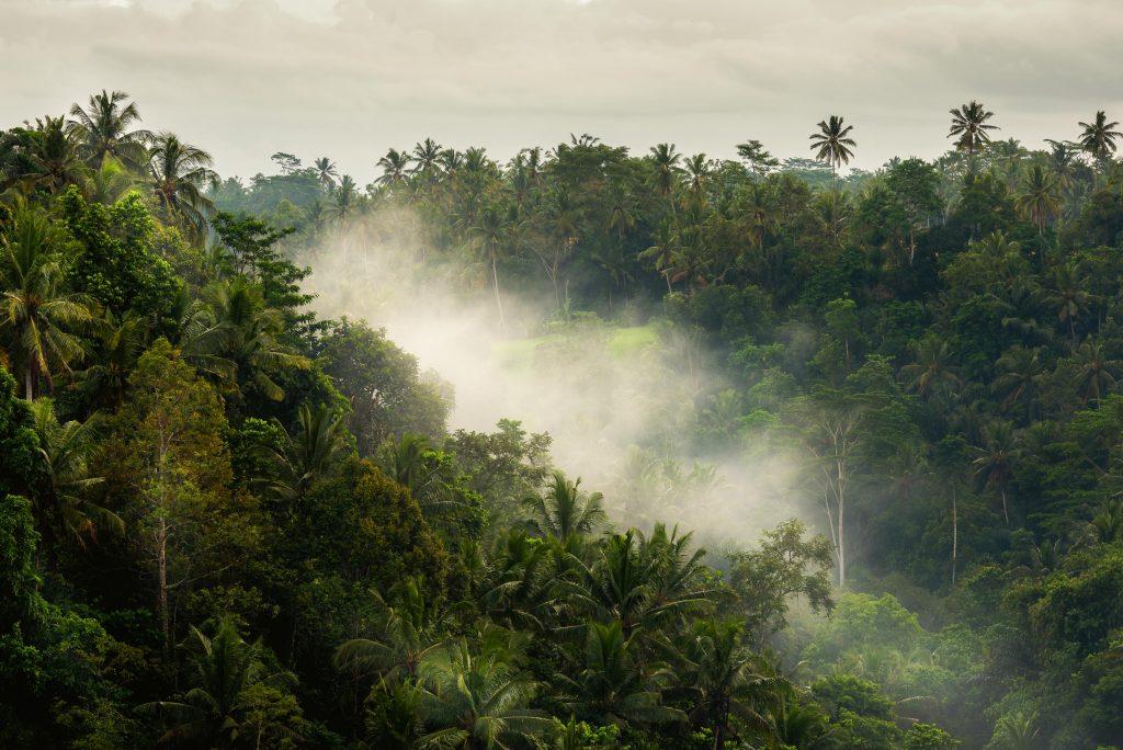 Warung Bodag Maliah - Sari Organik Ubud | Deviliciously Raw #organic #vegan #bali #indonesia