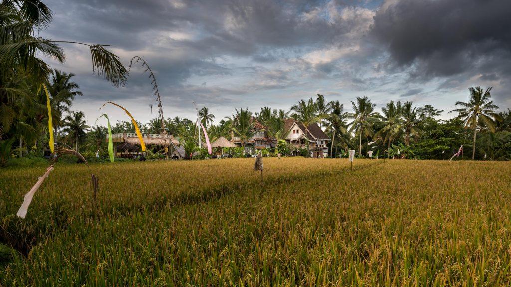The Rice Joglo Ubud | Deviliciously Raw #organic #vegan #bali #indonesia